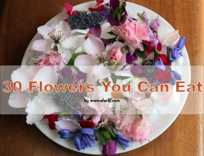30 Flowers You Can Eat: Get to Know the Beautiful and Edible Flowers